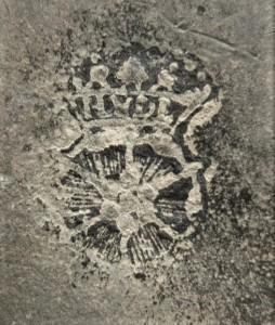 Merkteken klassieke theepot tin, antiek Nederland